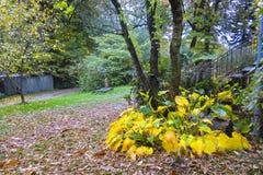 Jesieni wrażenie od Saxony lasu blisko Hamburg, Niemcy Obrazy Stock
