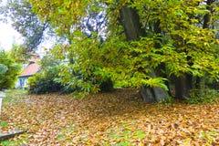 Jesieni wrażenie od Saxony lasu blisko Hamburg, Niemcy Obraz Stock