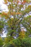 Jesieni wrażenie od Saxony lasu blisko Hamburg, Niemcy Zdjęcia Stock