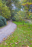 Jesieni wrażenie od Saxony lasu blisko Hamburg, Niemcy Fotografia Royalty Free