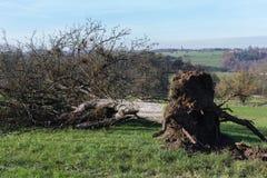 jesieni wsi krajobraz z deadfallen drzewa i niebieskie niebo zdjęcia royalty free