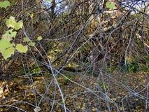 Jesieni wyspa Calarasi obrazy stock