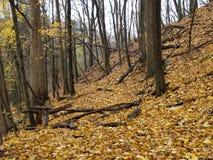 Jesieni wzgórze, Toronto, Ontario, Kanada Obrazy Royalty Free