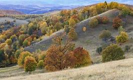 Jesieni wzgórzy lasowy zmierzch Krajobrazowa fotografia wzgórza w jesieni Kolorowa roślinność na wzgórzach w jesieni Obrazy Stock