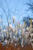 Jesieni życie zdjęcie royalty free