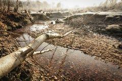 Jesieni złoto Zdjęcie Stock