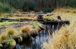 Jesieni zatoczka Fotografia Stock