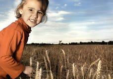 jesienią zbiorów Fotografia Royalty Free