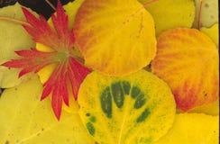 Jesieni zieleń i czerwień Fotografia Royalty Free