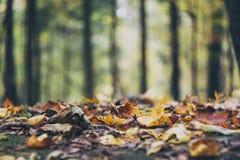 Jesieni ziemia Zdjęcie Royalty Free