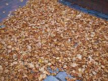 Jesieni zimy liście Fotografia Stock