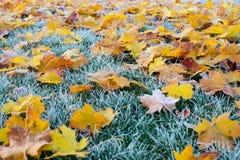 Jesieni, zimy liście Zakrywający W wczesnym poranku/Gruntują mróz Obraz Royalty Free