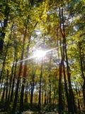 Jesieni zmiana obraz royalty free