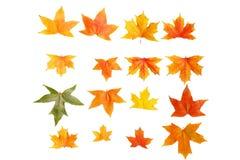 jesienią, zostaw upadek klonów Canada zdjęcia stock