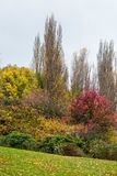 Jesienie coloured drzewa Queenstown i krzaki obrazy royalty free
