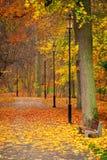 Jesienna aleja w parku Zdjęcia Royalty Free