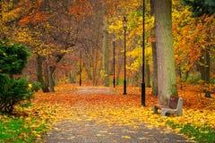 Jesienna aleja w parku Obrazy Royalty Free
