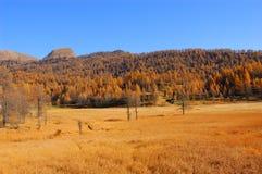 jesienna krajobrazowa halna sceneria fotografia royalty free