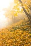 jesienna mgła Obrazy Stock
