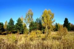 Jesienna natura, sceneria Zdjęcia Royalty Free