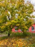 Jesienna natura, sceneria w mieście Obrazy Stock
