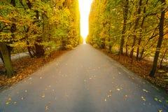 Jesienna parkowa aleja Fotografia Royalty Free