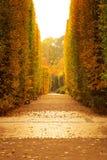 Jesienna parkowa aleja Zdjęcia Royalty Free