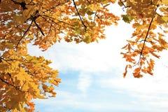 jesienna rama Zdjęcie Stock