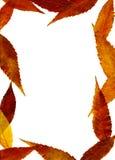 jesienna rama Fotografia Stock