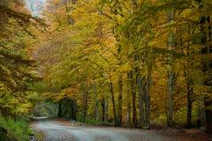 jesienna road Obrazy Stock