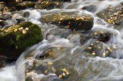jesienna rzeki Obrazy Royalty Free