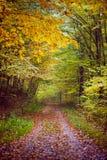 Jesienna scena w drewnach Zdjęcie Stock