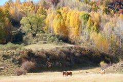 Jesienna sceneria Zdjęcia Stock