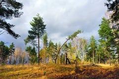 Jesienna sceneria Fotografia Stock