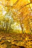Jesienna sceneria park Fotografia Royalty Free