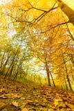 Jesienna sceneria park Obrazy Stock