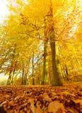 Jesienna sceneria w lesie Zdjęcie Royalty Free