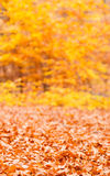 Jesienna sezonowa lasowa sceneria Fotografia Royalty Free