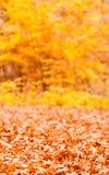 Jesienna sezonowa lasowa sceneria Zdjęcie Royalty Free