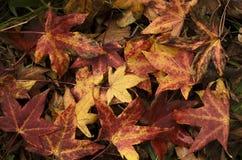 jesienna ziemia Zdjęcia Royalty Free