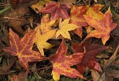 jesienna ziemia Zdjęcie Royalty Free