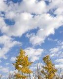 jesienne niebo Obraz Royalty Free