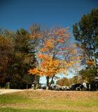 Jesienni brązowi drzewa z błękitnym jaskrawym niebem Fotografia Stock