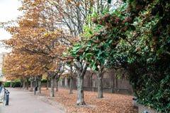 Jesienni brązowi drzewa z popielatymi niebami Zdjęcia Royalty Free