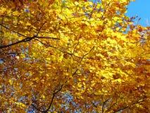 jesienni colours Zdjęcie Royalty Free