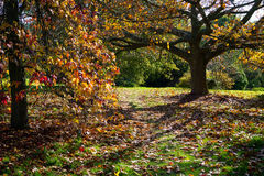 Jesienni Colours w Sussex Obrazy Royalty Free