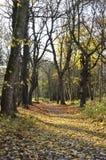 Jesienni drewna Zdjęcia Stock
