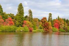 jesienni drzewa Obrazy Royalty Free