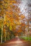 jesienni drzewa Obrazy Stock