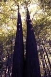 jesienni drzewa Obraz Stock